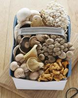 Digest like mushroom